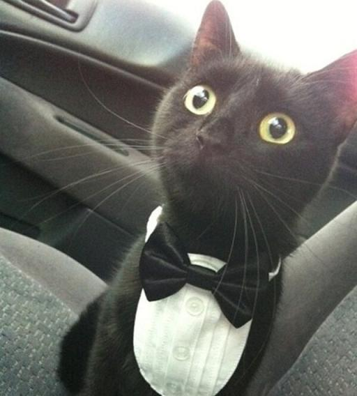 This is not my cat, but I need that neck tie.