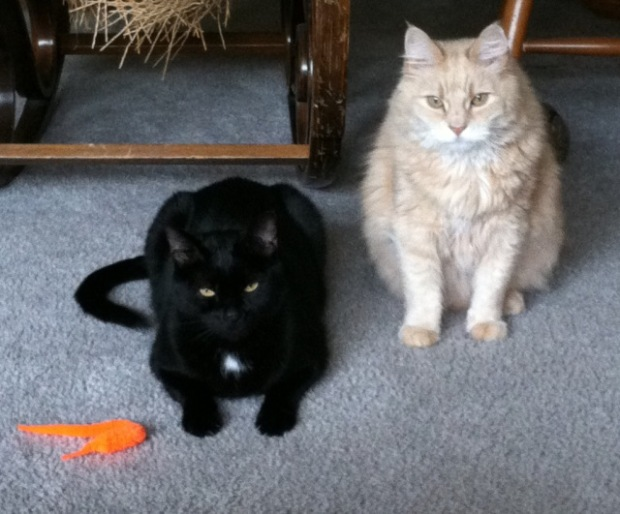 This is them with their new toy, Mr.Wiggles. The tan man is the messy pooper.