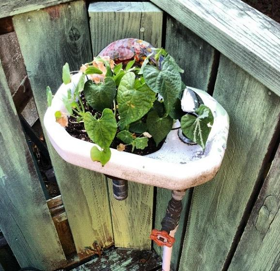 Random sink coming out of the porch? LET's PUT A PLANT IN IT! Genius..