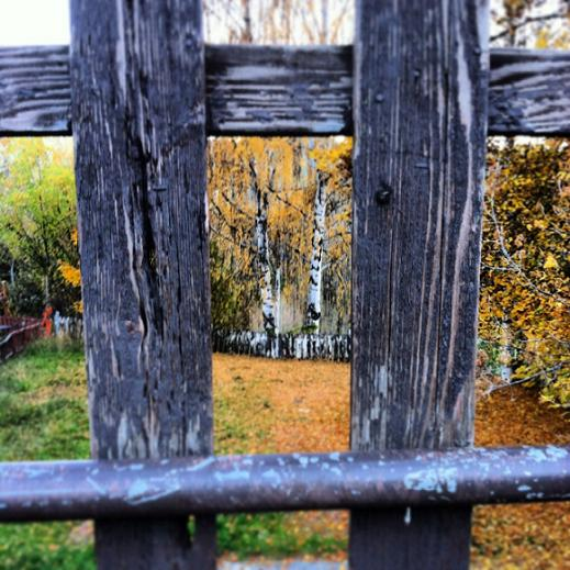 Fall foliage between the fence.